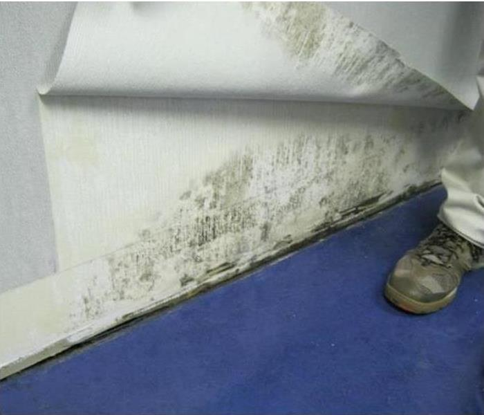 Mold behind wallpaper.